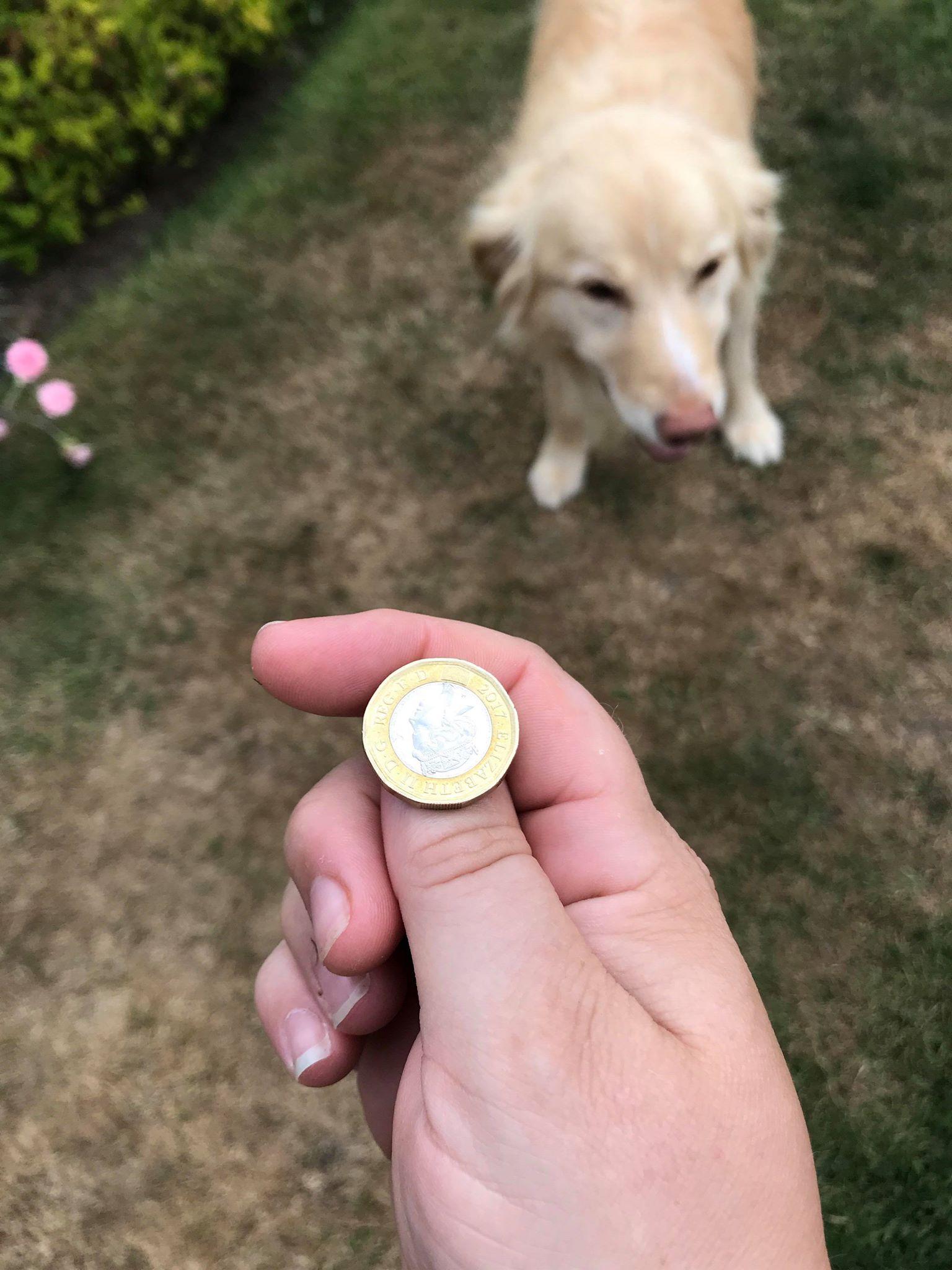 coin toss Stevie.jpg