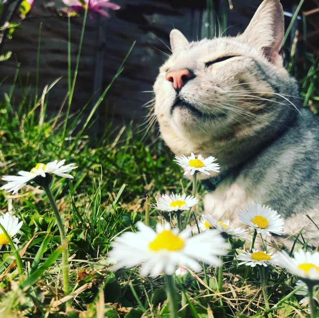 Cat sitting in daisies